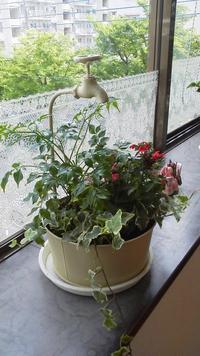 今年のサロンの花々達