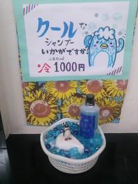 冷やしシャンプー(°▽°)
