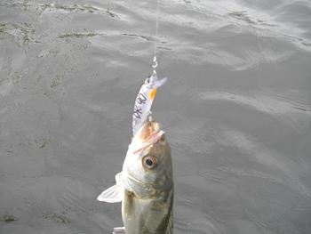 DK-90で釣れました!