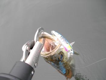 YB-70で釣れました!