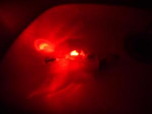 LED自動点滅エギ