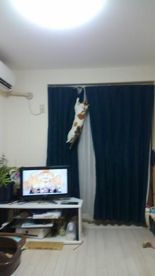猫のカーテンのぼり