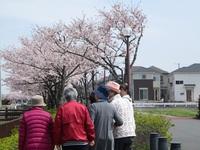綺麗な桜吹雪