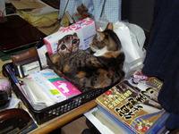 ミーちゃんが机の上に