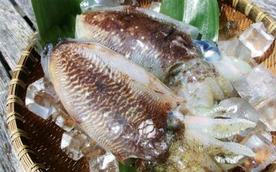 優しい旬の味!わらびと甲イカの卵とじ