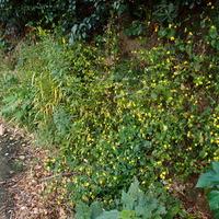 秋にも花の多い壱岐の島