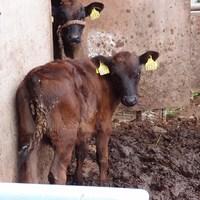 牛糞にまつわる30年近いかかわり