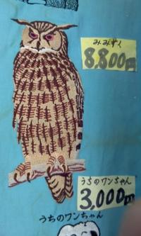 岡本洋品店、オリジナル刺しゅう『ワシミミズク』を、リニューアル。