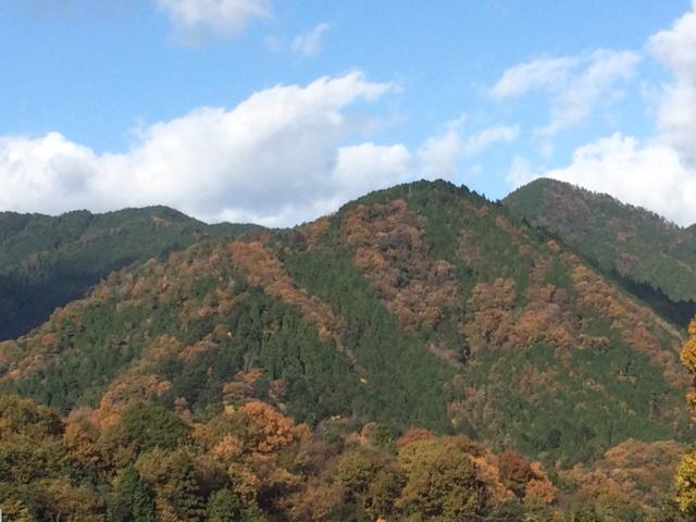 センナリより 秋の景色とおすすめ商品