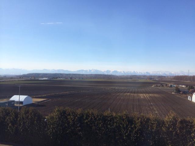 北海道、有機のじゃがいも畑