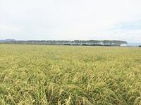 有機米の産地へ。