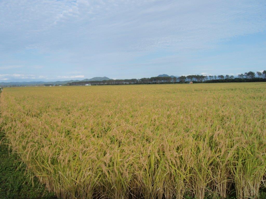 お米の産地に今年も行ってきました。