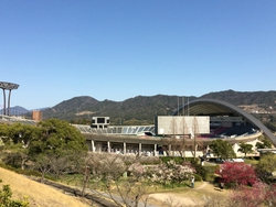 広島にも春が来ました❀