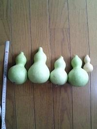 季節によって蒔いた種と違う大きさの瓢箪(ひょうたん)