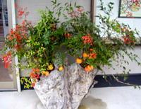 店舗前の花