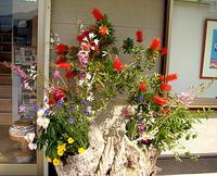 季節の花満開