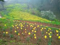 黄色い丘 in 佐礼谷