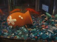 金魚も気分転換