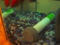 金魚 その3