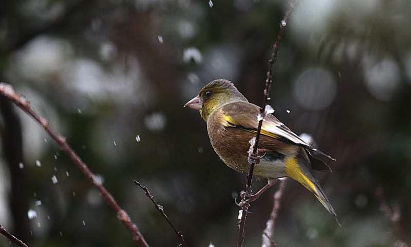淡雪や… この鳥 一体何の鳥?