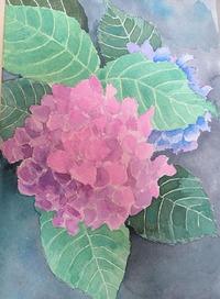 紫陽花を描きましたその2