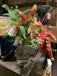 ズコットのお花事情と夏メニュー変更のお知らせ☆